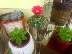 2サボテン花