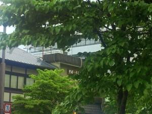 店の前の木